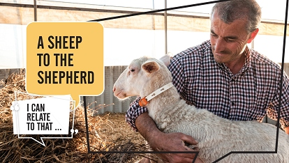 I can relate to that: Sheep to the Shepherd