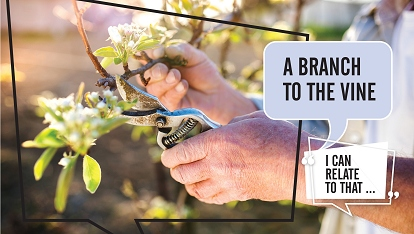 I can relate to that: Branch to the Vine